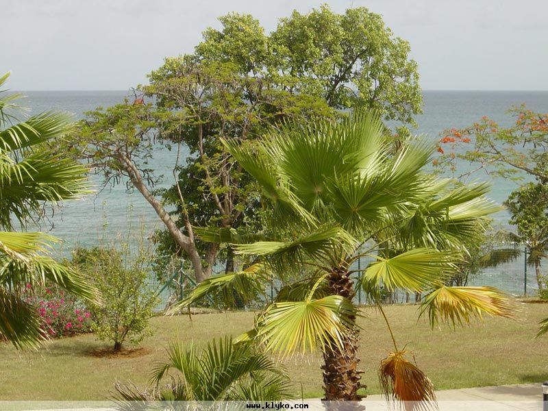 Arbres de Martinique